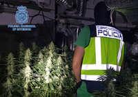 Detenidos en Talavera tres varones de una misma familia que formaban un grupo criminal dedicado al cultivo de marihuana
