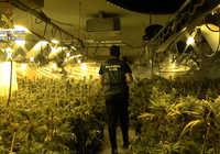 La Guardia Civil incauta 4.638 plantas de marihuana en un chalet de Toledo
